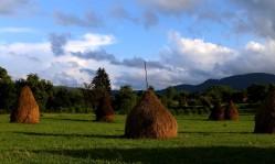 Šieno kupetos - šiaurinės Rumunijos dalies kraštovaizdžio dalis