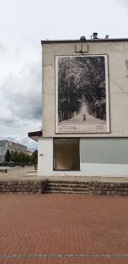 """Kaštonų alėja - istorinis atvirukas iš Šiaulių """"Aušros"""" muziejaus archyvų."""
