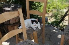 Kretos katės