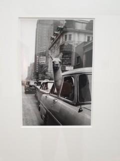 LENTOS Kunstmuseum Linz, Austrija. A Llama in Times Square. New York. 1957, Inge Morath.