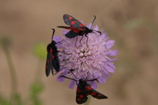 Flora ir fauna