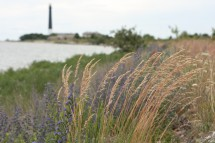 Siorvės pusiasalis ir švyturys