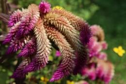 Botanikos sodas