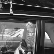 Vivian Maier, Chicago, 1966.